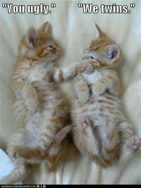 Ugly Cat Meme - funny kittens funny jokes to cheer u up