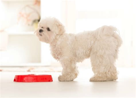 best puppy food for allergies the best food options for your with allergies petmd