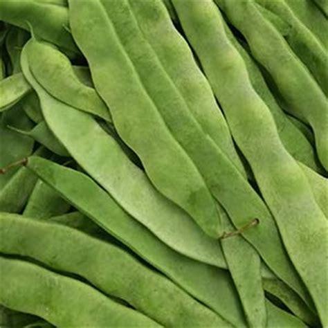 bean varieties    grow  nurseries