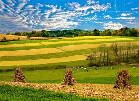 ohio landscape photography cows and farmland photography