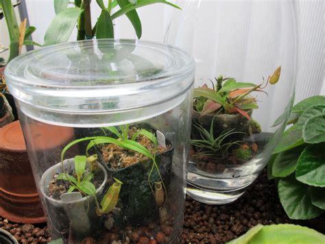 tropical plants for terrariums miniature monsters the tropical pitchers houseplants now