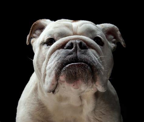 puppy portraits portrait