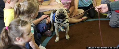 pugs as therapy dogs xander the blind pug warms hearts as therapy
