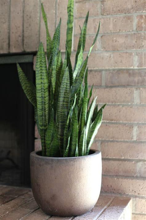 jenis tanaman hias beracun  wajib dihindari