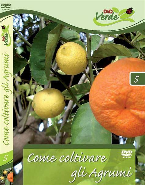 concimare limoni in vaso coltivazione agrumi in vaso