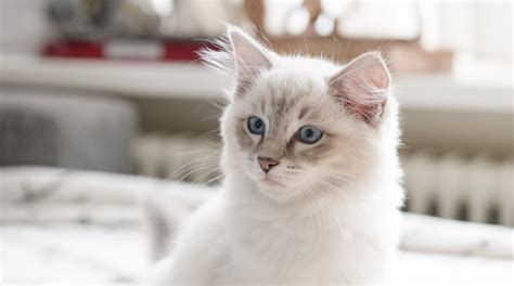 how to introduce a kitten to its new home iamcasper