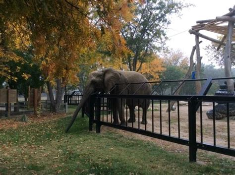 Garden City Zoo Ks Getting A Drink Richardson Zoo Elephant Picture Of
