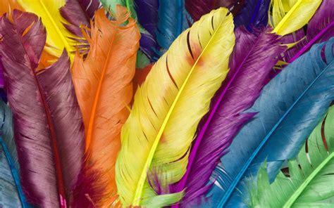 colorful feathers free 43 colorful desktop backgrounds technosamrat