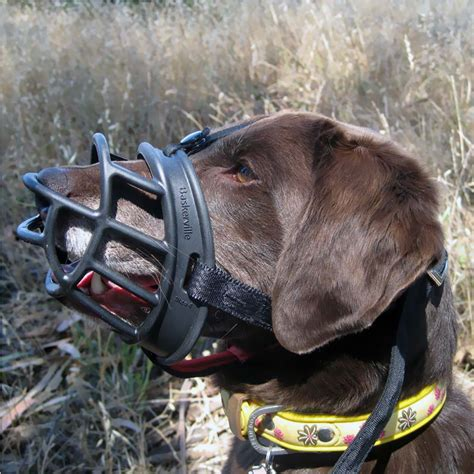 comfortable muzzles for dogs baskerville ultra muzzle size 5