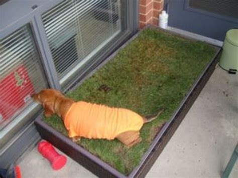 balcony dog bathroom full download best indoor dog potty choices