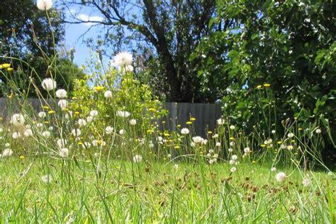 here is garden of weeds daniel bowen dot