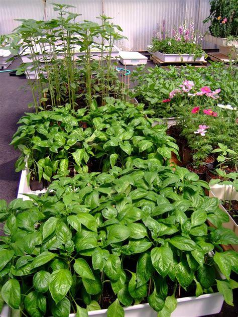 hydroponic gardening ideas  pinterest indoor