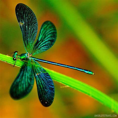 macro photography photo sharing site we macro photography gallery a world to travel
