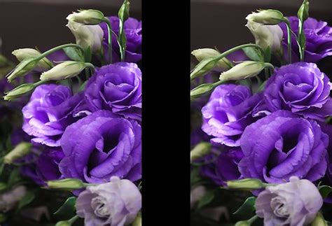 names of purple names of purple flowers image search results