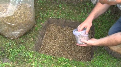 Heimische Pilze Im Garten by Speisepilze Im Garten Pilze Selbst Z Chten Pilz Plantage