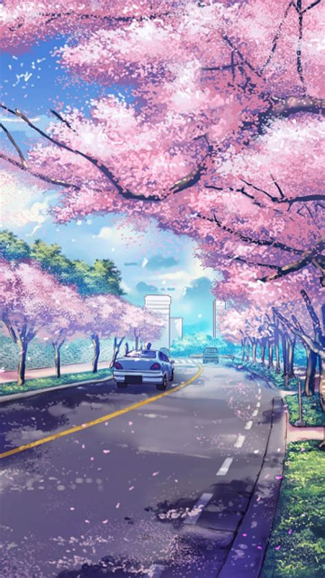 nature aesthetic cherry blossom  scenery backgrounds