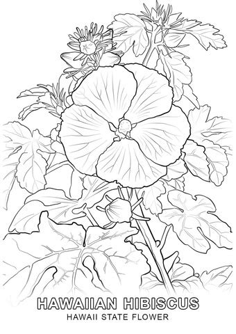 hawaii state flower coloring page  printable