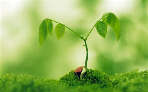 plant wallpaper the 10 nature green color hd wallpapers for your