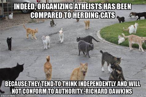 Herding Cats Meme - herding cats meme 28 images stupid people meme like