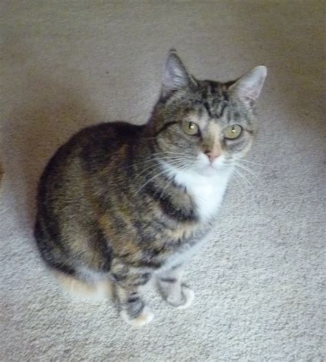 why do cats on rugs cat on carpet carpet vidalondon