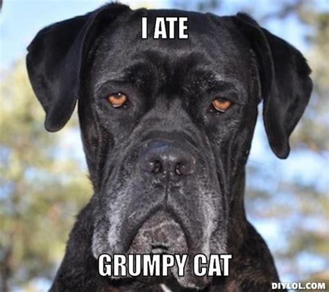 Grumpy Dog Meme - grumpy dog pictures grumpy dog meme generator i ate