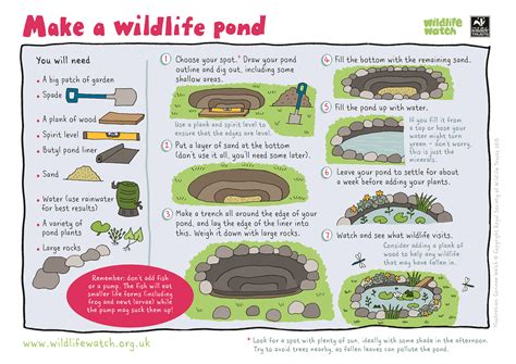 catching up with wildlife trusts garden