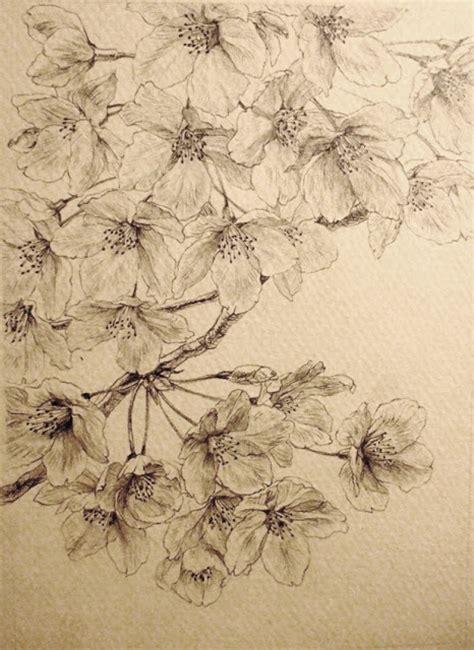 fiori di ciliegio giapponesi disegni pittura giapponese di shoko okumura quot someiyoshino quot tipico