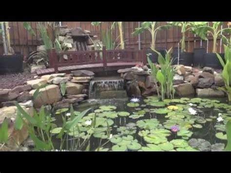 million dollar backyard pond mikas pond bee trump