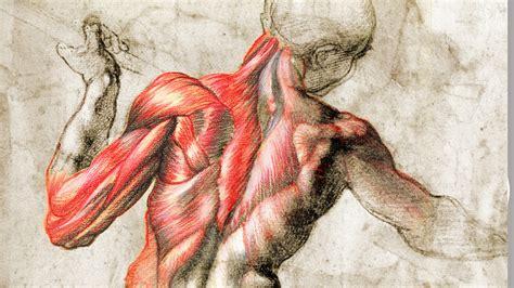 imagenes artisticas cuerpo humano anatom 237 a fisioterapia en constante movimiento