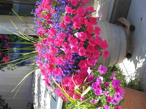 flowers for container gardening container gardening colonial nursery