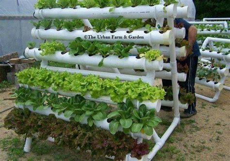 vertical pvc pipe vegetable garden 1329 best aquaponics and hydroponics images on pinterest