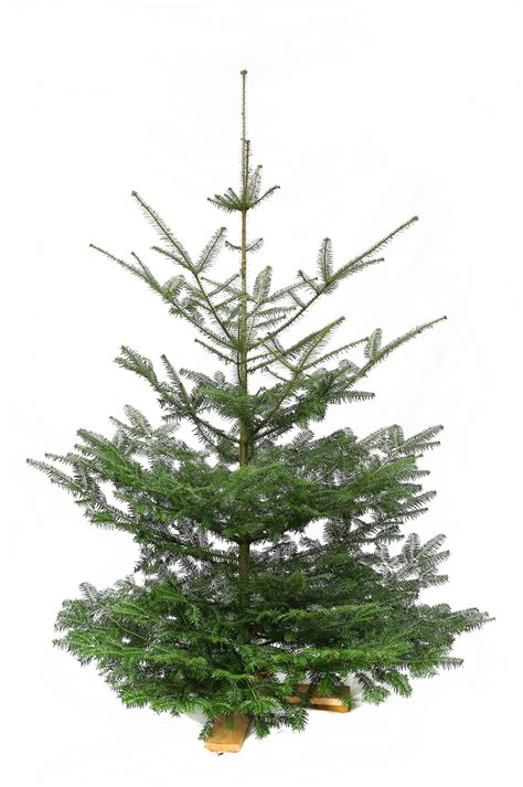 weihnachtsbaum verkauf weihnachtsbaum verkauf 28 images bilder und suchen