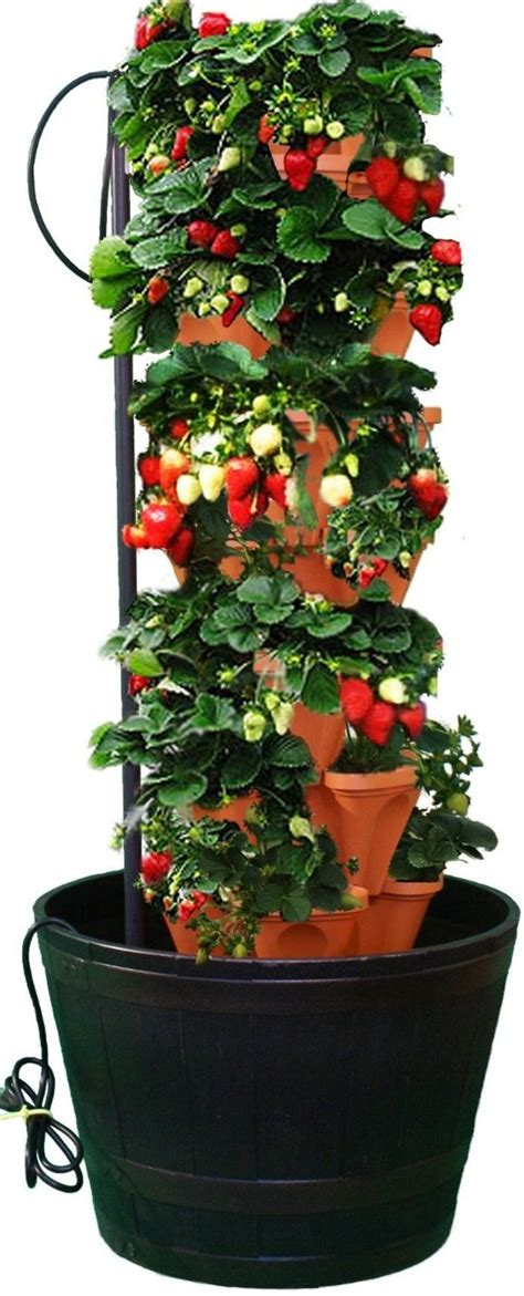 Strawberry Tower Planter by Pvc Strawberry Tower Vertical Pvc Strawberry Planter