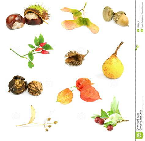 p fruits with seeds autumn nuts seeds and fruits stock photo image 11242974