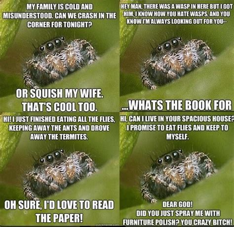 Cute Spider Meme - funniest memes ever 036
