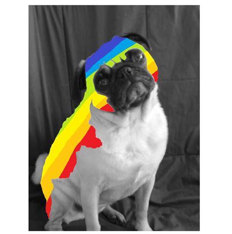 rainbow pug pug 2day is a rainbow pug of day by mountneverest on deviantart