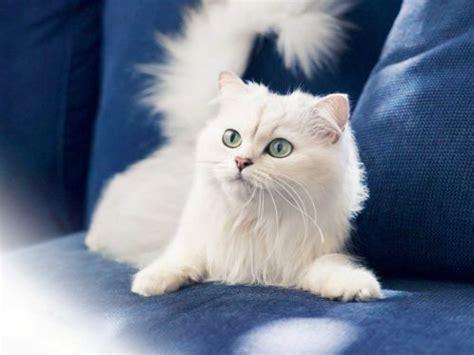 divano gatto gatti e stress come rinnovare l arredamento senza