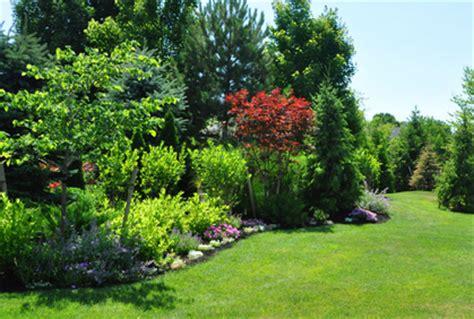 Garden Shrub Ideas Pictures Of Shrubs For Landscaping 2016 Design Plans
