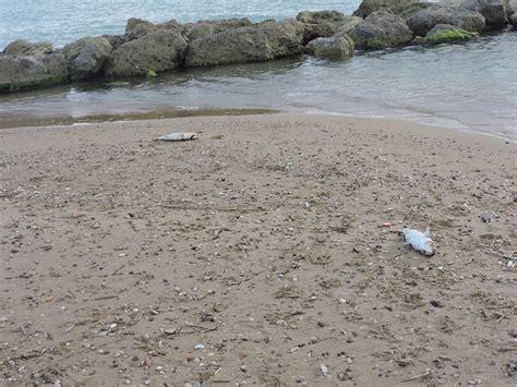 capitaneria di porto licata moria di pesci la capitaneria avvia accertamenti
