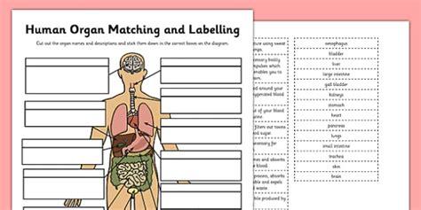 Nervous System And Sense Organs Skills Worksheet Answers
