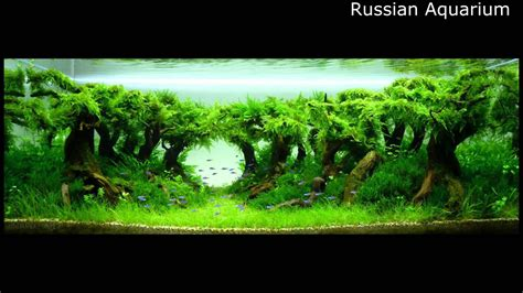 Best World Aquascape Underwater Landscapes Awesome