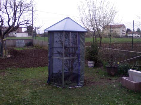 accoppiamento cardellini in gabbia accoppiamento cardellini in gabbia 28 images foto