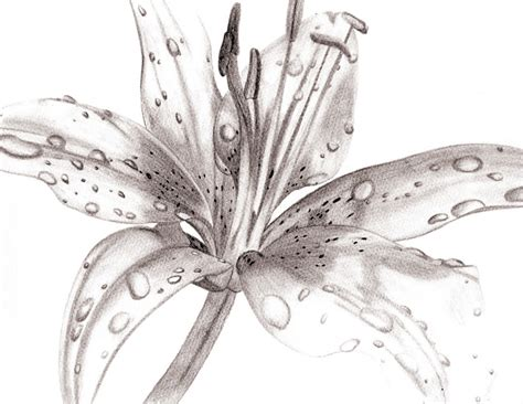 scribble doodle draw drawing flowers in pencil 1000 ideas about flower drawing