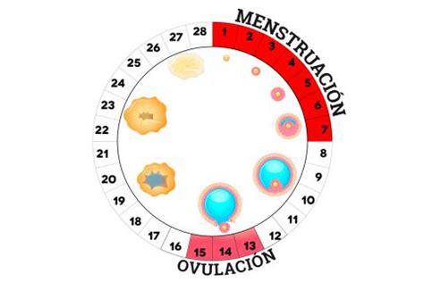 uno puede salir embarazada con la menstruacion qu 233 ocurre en los ovarios durante el ciclo menstrual