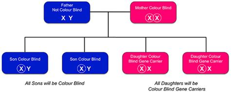 how is color blindness diagnosed inherited colour vision deficiency colour blind awareness