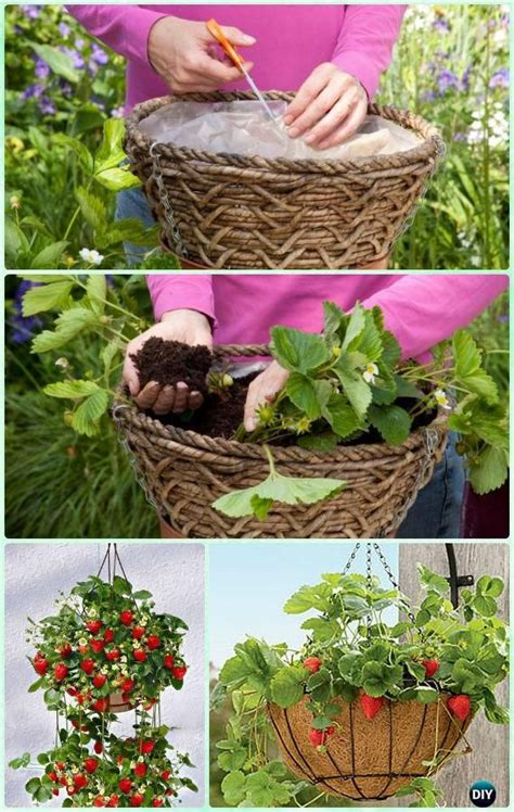 best 25 strawberry pots ideas on potted herb