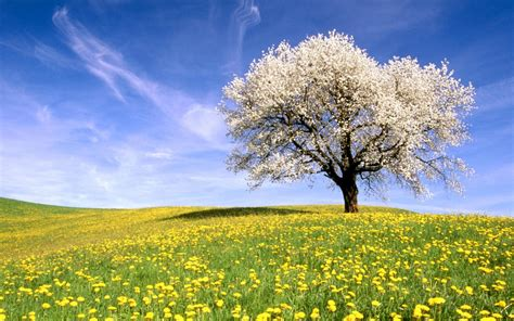 imagenes en full hd 1080p wallpapers dia de la primavera full hd 1080p banco de