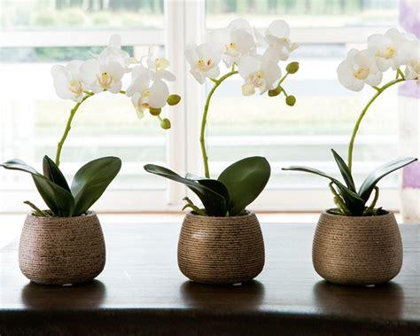 fiori da interno fiori da interno ecco alcune variet 224 perfette per l