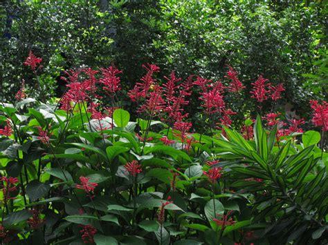Flower Plants For Garden 1784 Firespike