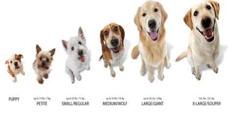small sized breeds 4 best images of small size chart breed chart clothes size chart and